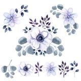 Grupo da aquarela de flores e de vegetação da anêmona Fotos de Stock Royalty Free