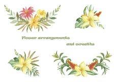 Grupo da aquarela de grinaldas e de composições com flores e as plantas tropicais ilustração stock