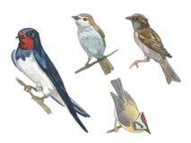 Grupo da aquarela de pássaro Fotos de Stock Royalty Free