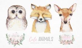 Grupo da aquarela de raposa do bebê da floresta, de cervos e de animal bonitos isolados desenhos animados da coruja com flores Il ilustração royalty free