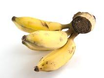 Grupo da banana no fundo branco Imagem de Stock