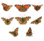 Grupo da borboleta Imagens de Stock Royalty Free