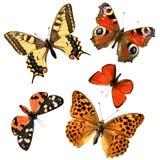 Grupo da borboleta Fotografia de Stock