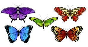 Grupo da borboleta ilustração stock
