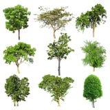 Grupo da coleção da árvore isolado Imagem de Stock