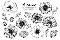 Grupo da coleção de flor e de folhas da anêmona que tiram a ilustração fotografia de stock royalty free