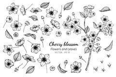 Grupo da coleção de flor e de folhas da flor de cerejeira que tiram a ilustração fotografia de stock royalty free