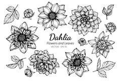Grupo da coleção de flor e de folhas da dália que tiram a ilustração imagem de stock royalty free