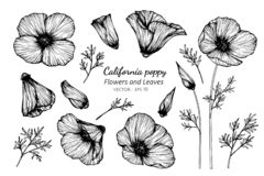 Grupo da coleção de flor e de folhas da papoila de Califórnia que tiram a ilustração imagem de stock