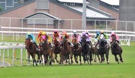 Grupo da corrida de cavalos Fotografia de Stock Royalty Free