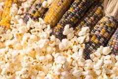 Grupo da espiga de milho colorido secada orgânica com pipoca já estalada Imagem de Stock Royalty Free
