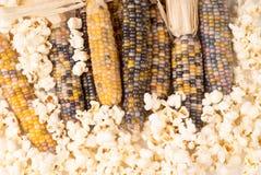Grupo da espiga de milho colorido secada orgânica com pipoca já estalada Fotos de Stock