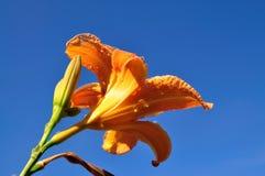 Grupo da flor. Imagens de Stock