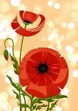 Grupo da flor da papoila Fotografia de Stock Royalty Free
