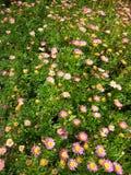Grupo da flor roxa fotos de stock