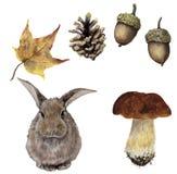 Grupo da floresta do outono da aquarela Cone pintado à mão do pinho, bolota, lebre, cogumelo e licença amarela isolados no fundo  ilustração royalty free