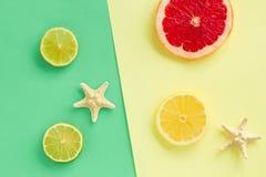Grupo da forma de citrinos frescos tropicais do verão Projeto Citrino do fruto Cor brilhante O art m?nimo Vista superior O verão  foto de stock royalty free