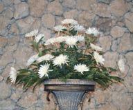 Grupo da foto das flores brancas Foto de Stock