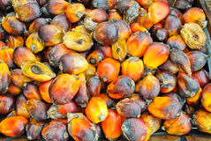 Grupo da fruta de Tenera Imagem de Stock
