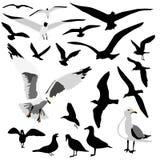 Grupo da gaivota Fotografia de Stock