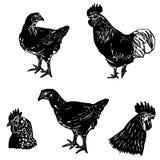 Grupo da galinha Fotografia de Stock Royalty Free