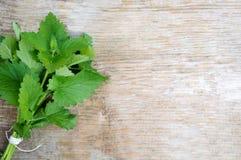 Grupo da hortelã verde fresca! Foto de Stock Royalty Free