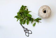 Grupo da hortelã verde fresca Imagem de Stock