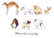 Grupo da ilustração da aquarela de cães Fotos de Stock Royalty Free