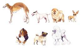 Grupo da ilustração da aquarela de cães Fotos de Stock