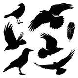 Grupo da ilustração do corvo Imagens de Stock Royalty Free