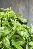 Grupo da manjericão orgânica fresca Imagem de Stock Royalty Free