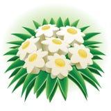 Grupo da margarida. Imagem de Stock Royalty Free