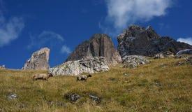Grupo da montanha da dolomite em Tirol sul Imagem de Stock Royalty Free