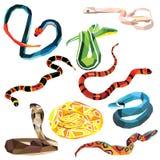 Grupo da serpente ilustração royalty free