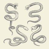 Grupo da serpente do desenho da mão Projeto do vetor da tatuagem das serpentes dos animais selvagens isolado ilustração royalty free