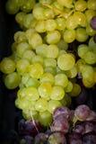 Grupo da uva Imagens de Stock
