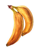 Grupo das bananas Imagens de Stock Royalty Free