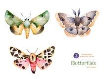 Grupo das borboletas e das traças pintados à mão de alta qualidade da aquarela ilustração royalty free