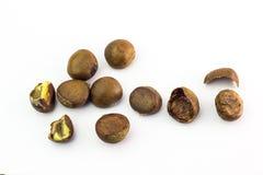 Grupo das castanhas-da-índia isoladas no fundo branco Fotografia de Stock Royalty Free