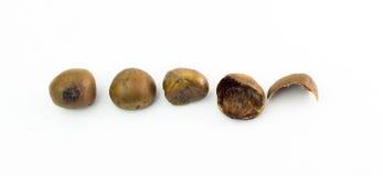 Grupo das castanhas-da-índia isoladas no fundo branco Fotografia de Stock