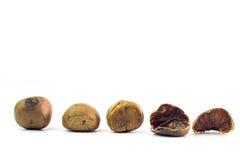 Grupo das castanhas-da-índia isoladas no fundo branco Imagem de Stock