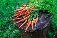 Grupo das cenouras Fotos de Stock