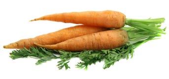 Grupo das cenouras Imagem de Stock