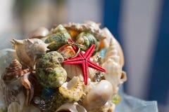 Grupo das conchas do mar com alianças de casamento imagem de stock royalty free