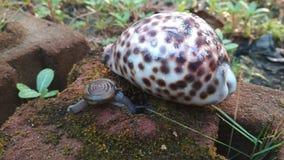 Grupo das conchas do mar dos amigos da natureza de animais foto de stock