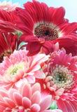 Grupo das flores Imagens de Stock Royalty Free