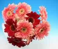 Grupo das flores Fotografia de Stock Royalty Free
