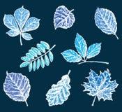 Grupo das folhas decorativas da árvore Foto de Stock