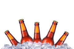 Grupo das garrafas de cerveja com gotas gelados no gelo Fotografia de Stock