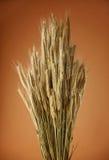 Grupo das orelhas do trigo imagens de stock